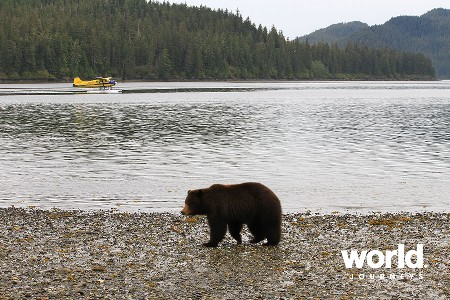 Admiralty Island Bear Viewing Day Tour (7 1/2 hours)