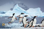 Antarctic Explorer Cruise:  Discovering the 7th Continent