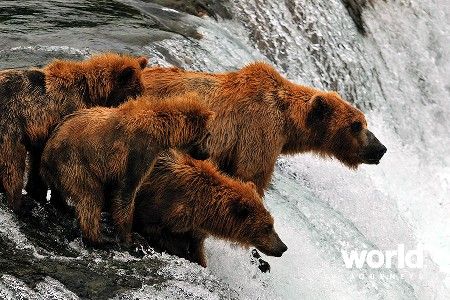 Bear Viewing at Brooks Lodge, Katmai National Park