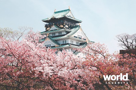 Cherry Blossom Japan 2019