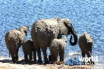 Chobe National Park Extension