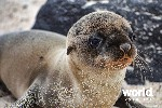 Cruise the Galapagos: Archipel I and Archipel II
