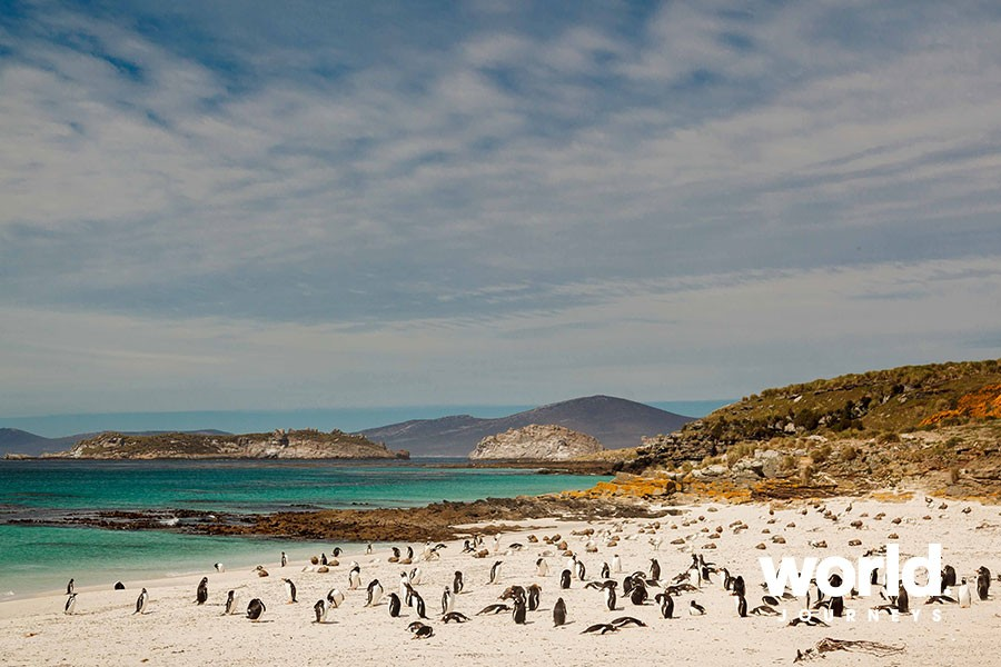 Falklands, South Georgia & Antarctica: Explorers & Kings