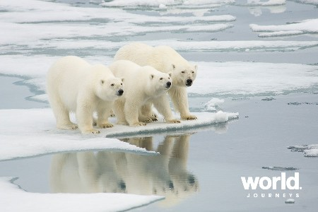 Introduction to Spitsbergen: Polar Bear Safari