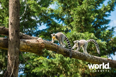Lemurs and Wildlife