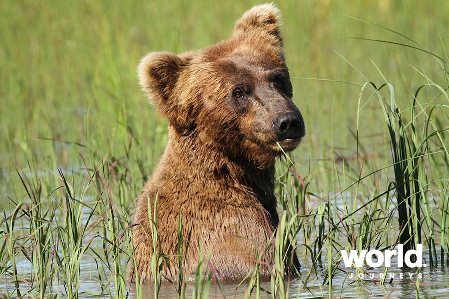 Redoubt Bay Lodge Bear Viewing