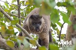 Wildlife of the Pantanal