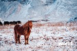 Winter Iceland Delights