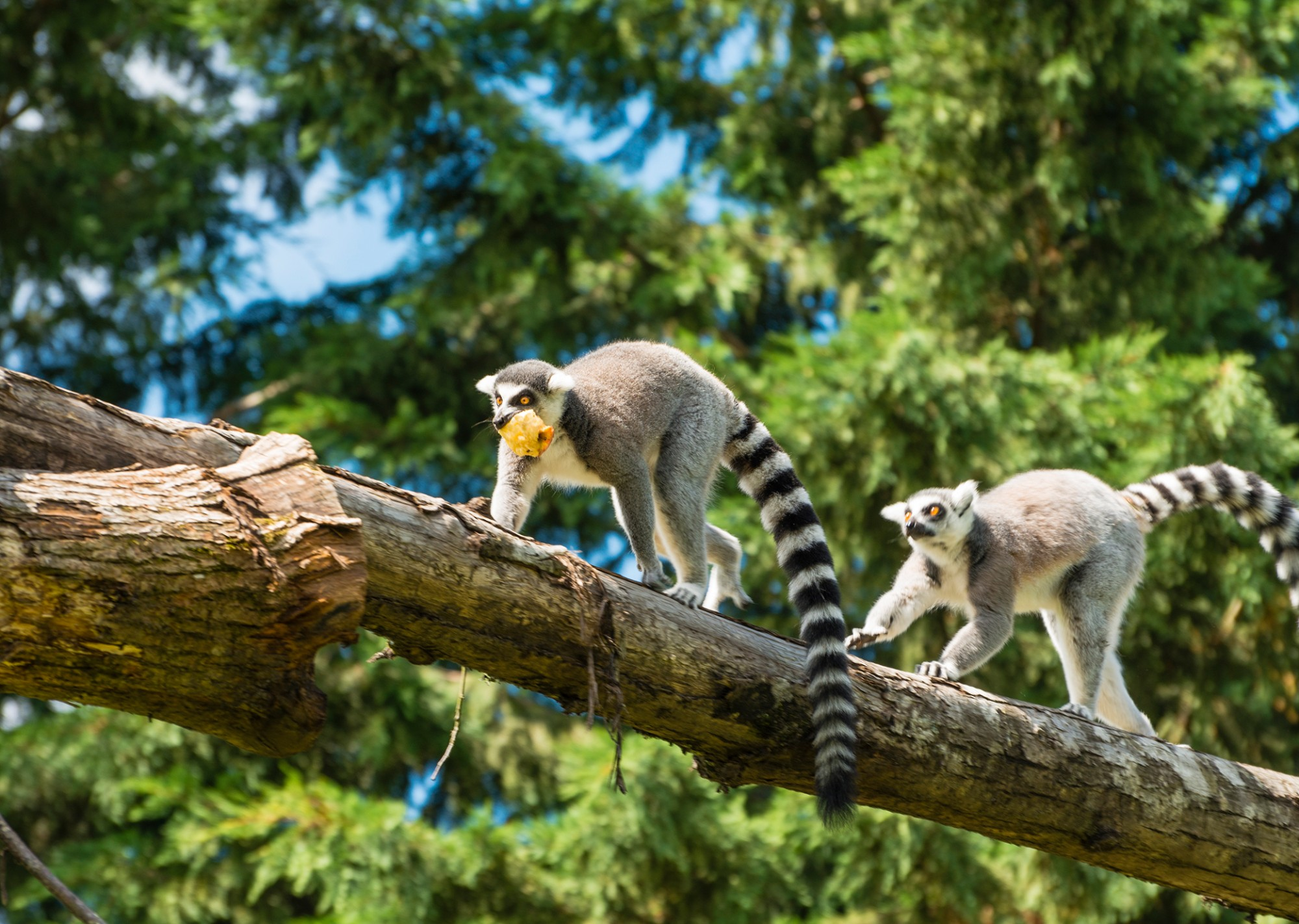 Madagascar Tours Amp Travel Packages World Journeys