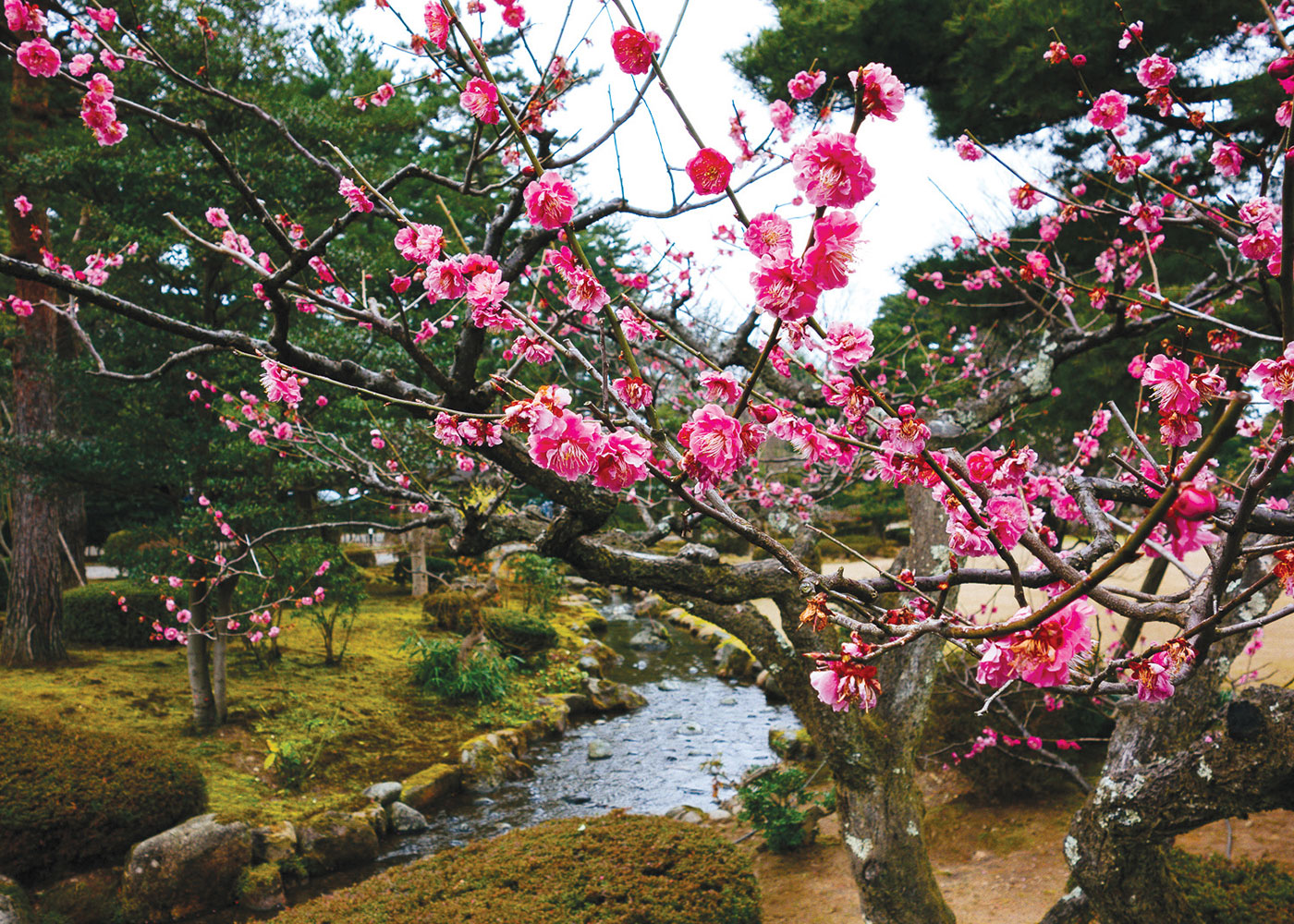 Banner Cherry-Blossom-Japan-1-648