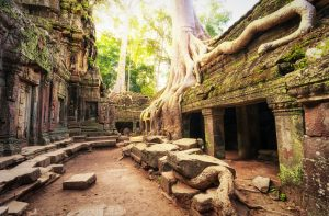 Ancient temple in jungle forest at Angkor Wat